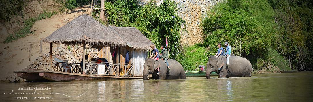 baignade éléphants